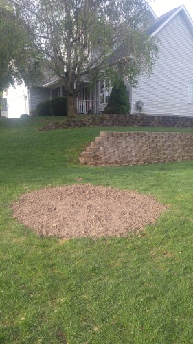 after_stump_removal