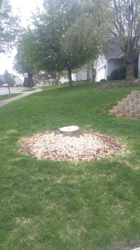 before_stump_removal